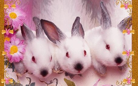 Фото Три милых белых кролика с цветами