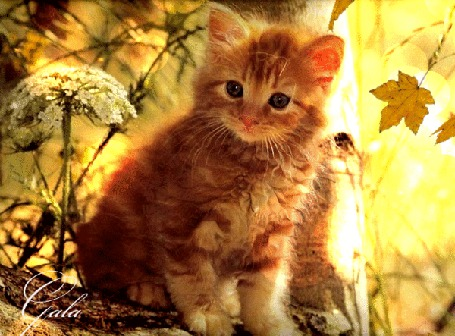 Фото Маленький рыжий котенок, сидит на ветке дерева, на фоне падающих осенних листьев