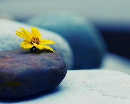 Цветок на рельсах