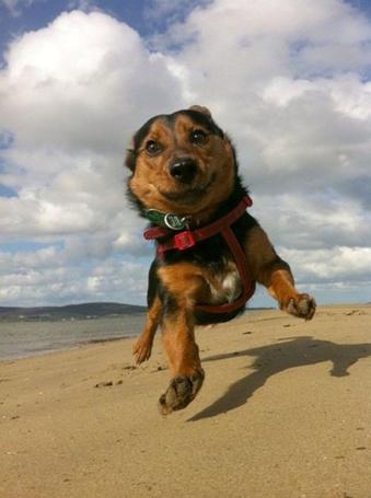 Фото Собака бегает по пляжу