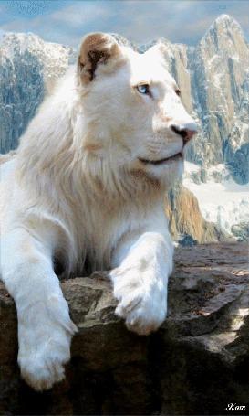 Фото Белый лев на фоне гор
