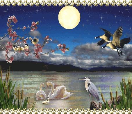 Фото Семейство лебедей покачивается на серебристой воде, из камышей ими любуется цапля, подлетающие утки радостным криком приветствуют птичек, сидящих на ветвях розовой сакуры