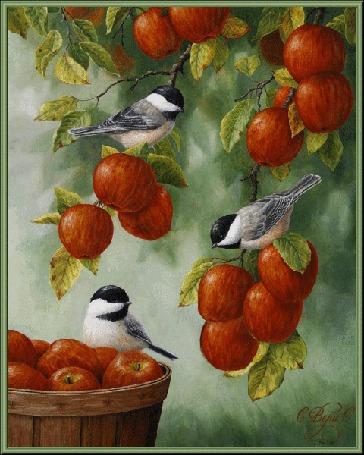 Фото Синички сидят на ветке с красными яблоками, рядом стоит корзина с яблоками