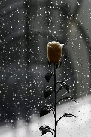 Фото Одинокая белая роза стоит на подоконнике, за окном идет дождь, капли стекают по стеклу
