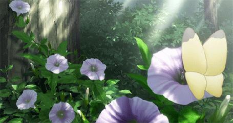 Фото Бабочки порхают над цветами