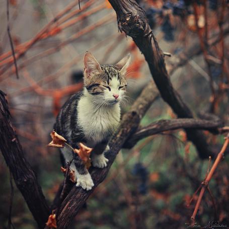 Фото Кот сидит на ветке дерева, закрыв глаза, фотограф ZoranPhoto