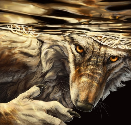 Фото Волк - оборотень нырнул под воду и смотрит желтыми глазами, автор vantid