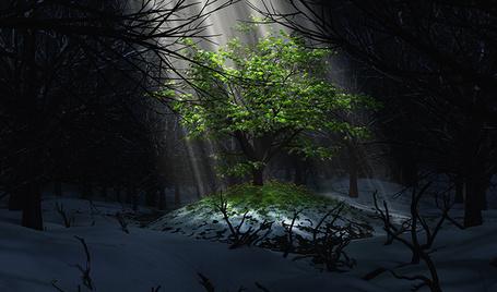 Фото Освещенное светом одинокое дерево в летнем наряде, на летнем бугорке с травой и цветами, среди зимнего заснеженного леса