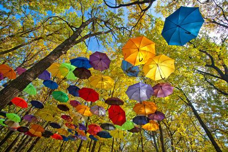 Фото Разноцветные раскрытые зонтики летают под кронами деревьев