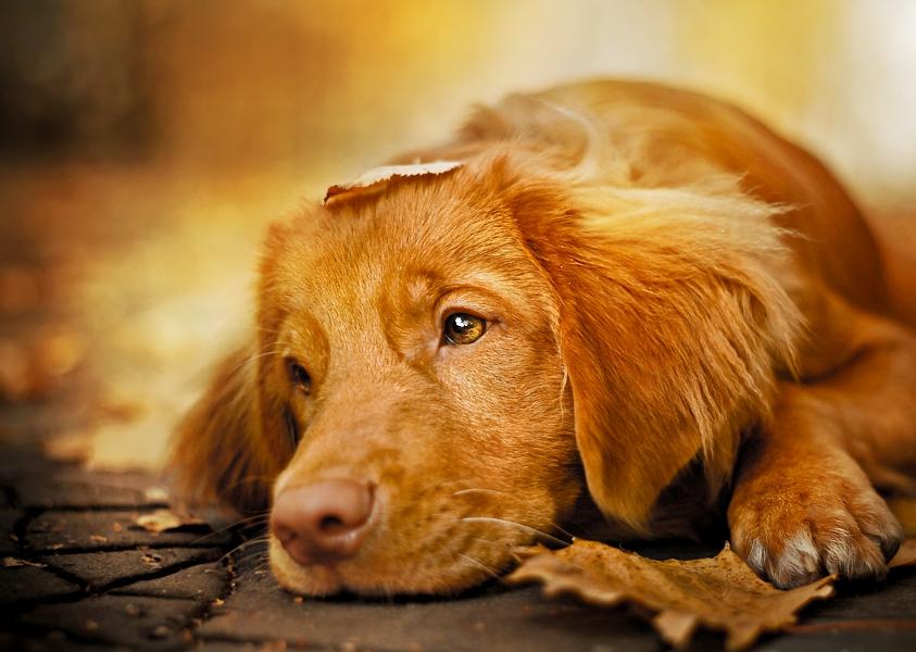 Открытки собаки грустно