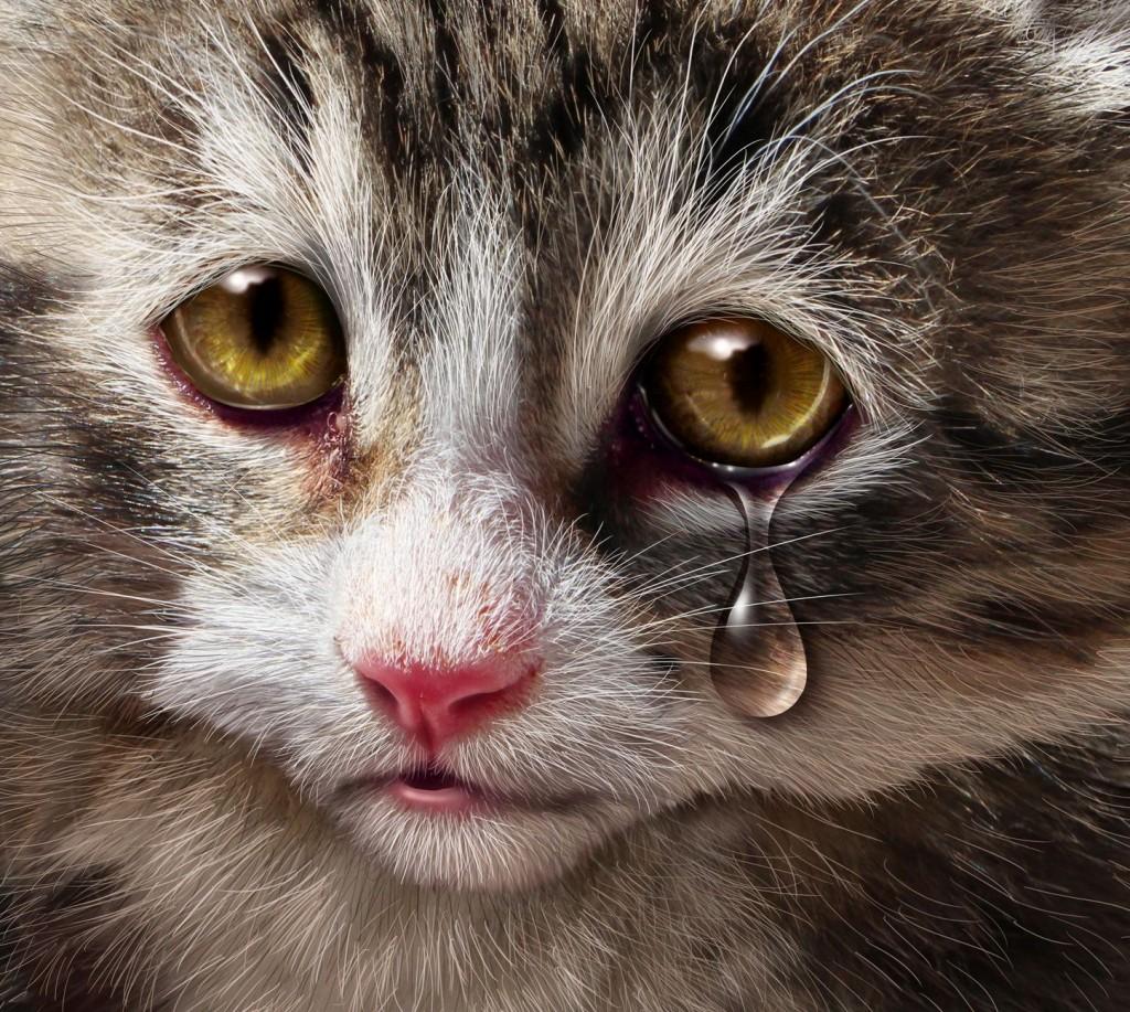 годы бурые слезы у кошек компания выпускают свои