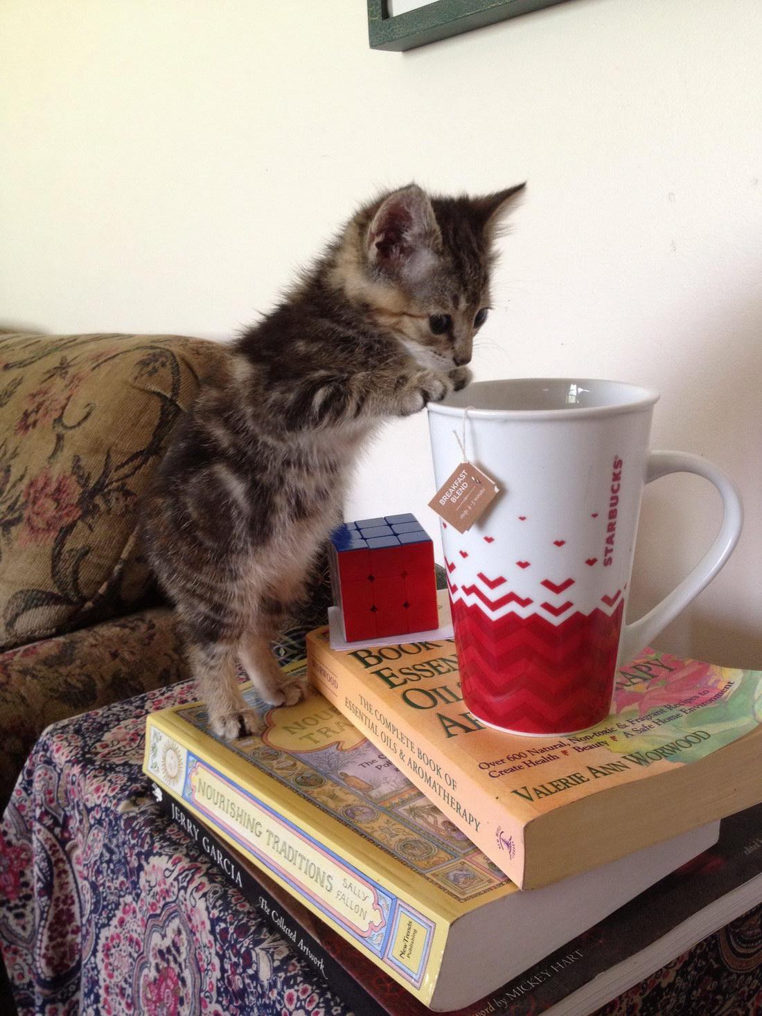 картинки с котами и чаем и мы не подкачаем размещенные