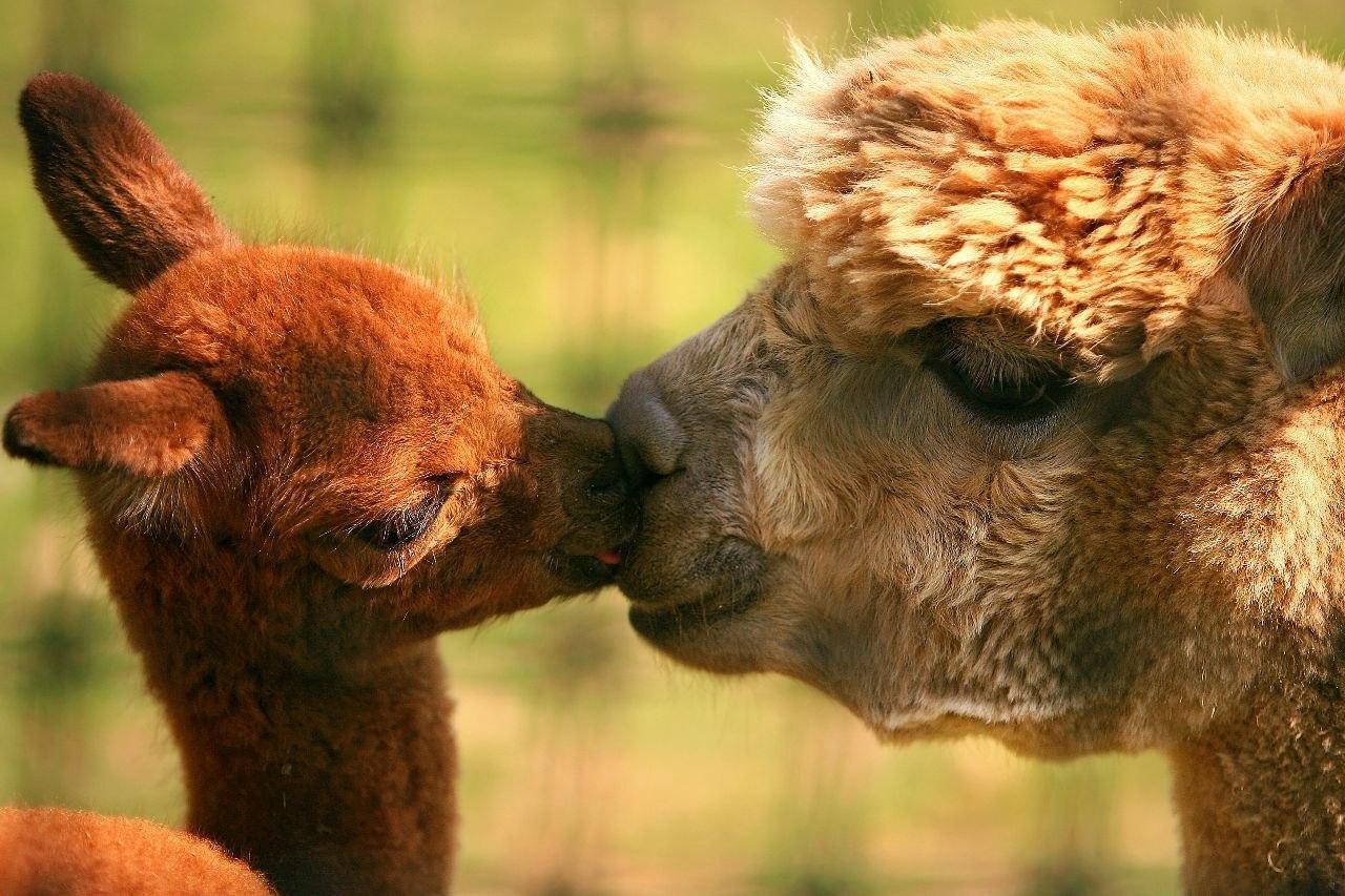Прикольные картинки с детенышами животных, днем рождения школа
