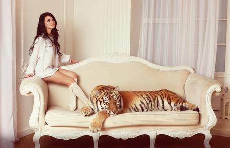 Фото интерьер, тигры, коллекция фотографий, фотки, скачать фото, фотографии