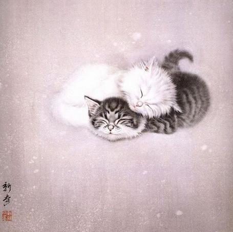 Фото Два маленьких котенка спят, при этом белый котенок положил голову на полосатого котенка, снизу написаны иероглифы, работа Ми Чуньмао