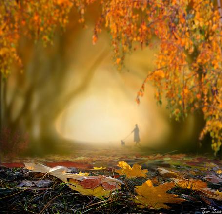 Фото На переднем плане трава в осенних листьях, в конце дороги дама с собачкой, фотограф Igor Zenin / Игорь Зенин