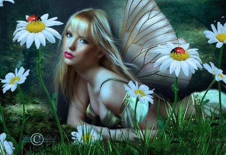 Фото Девушка с крыльями бабочки лежит среди ромашек, by DesignbyKatt