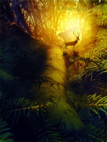 Фото Олень стоит в солнечных лучах на большой еловой ветви, by Tamara Rouwendal