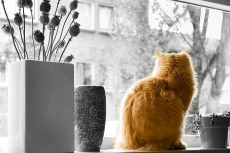 Фото Рыжий кот на подоконнике между вазами