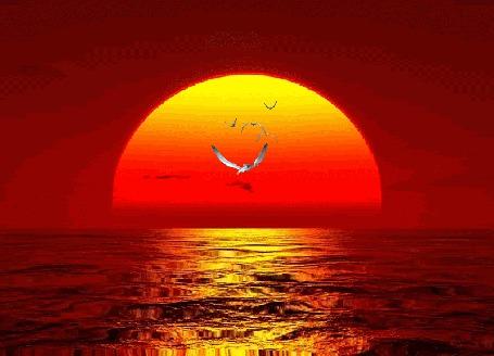 Фото Белые чайки летят над морем на фоне заходящего за горизонт громадного круга солнца