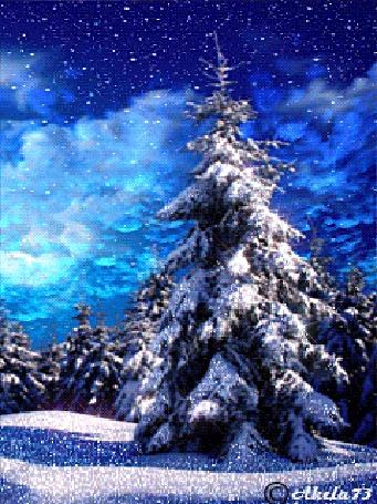 Фото Высокая ель в зимнем лесу покрытая густым слоем снега, над ней проплывают облака и с неба падают крупные хлопья снега, автор Akela 73