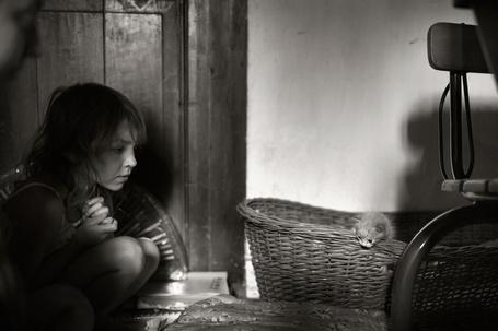 Фото Девочка смотрит на маленького котенка в корзине