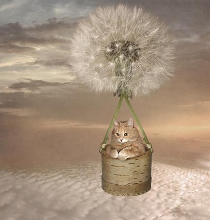 Фото Кот на воздушном шаре из цветка одуванчика