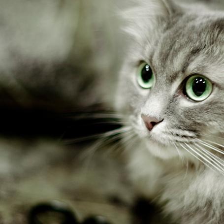 Серый кот с цветами фото