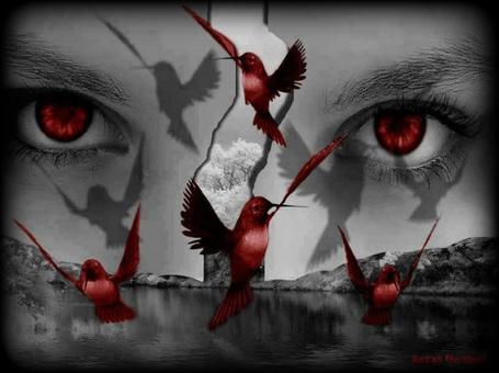 Фото Взгляд красных глаз и летающие красные птички на черном фоне