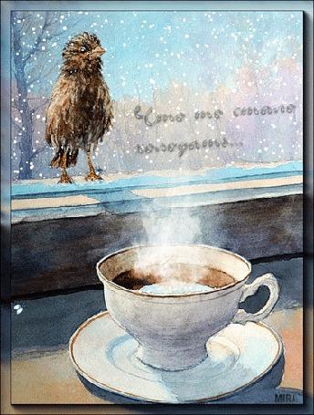Фото Голодный воробей пытается склевать паучка, который ползает по стеклу окна с другой стороны, там где стоит чашка с горячим кофе (Что -то стало холодать.)