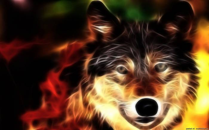 Фото Огненный волк на размытом фоне