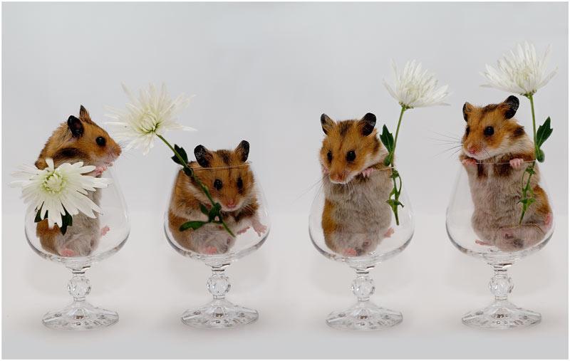 Смешные картинки с животными поздравление с днем рождения