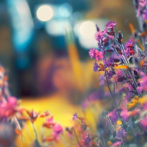 Фото фиолетовые цветы на размытом