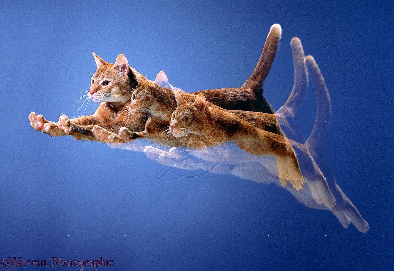 Картинки летающий кот