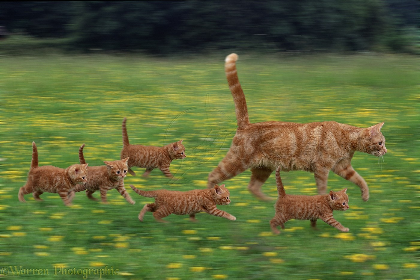 Фото Кошка с котятами бегут по лугу