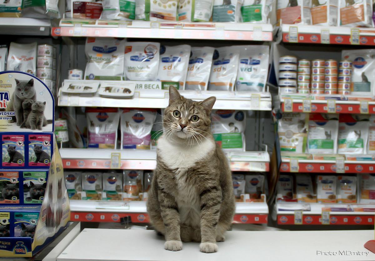 картинки кошки в магазине появилась
