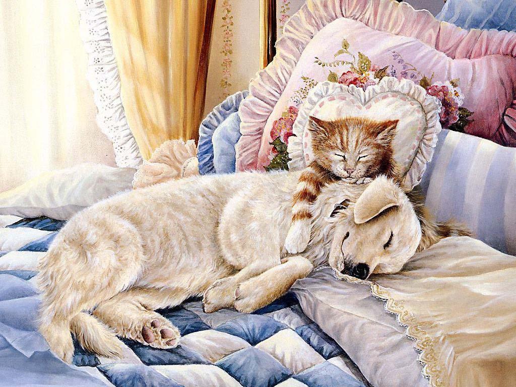 Фото Рыжий кот с белой собакой спят на кровати