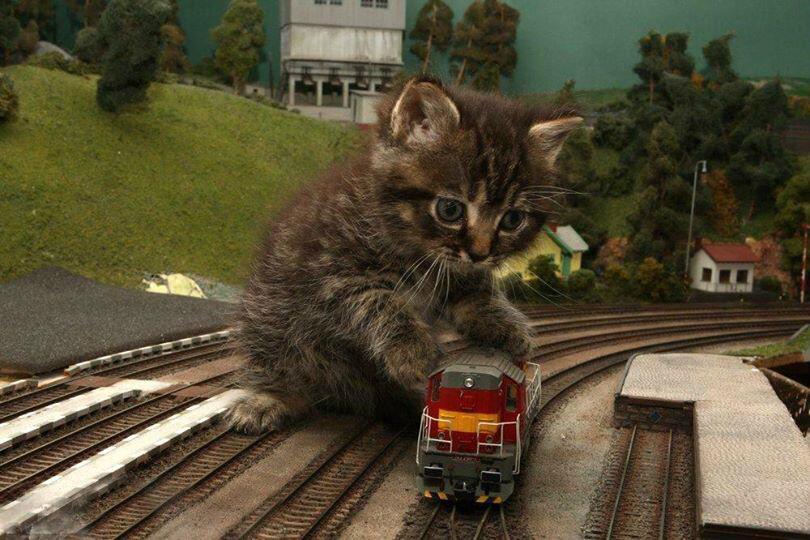 железная дорога смешные фото вороны повсеместно распространены