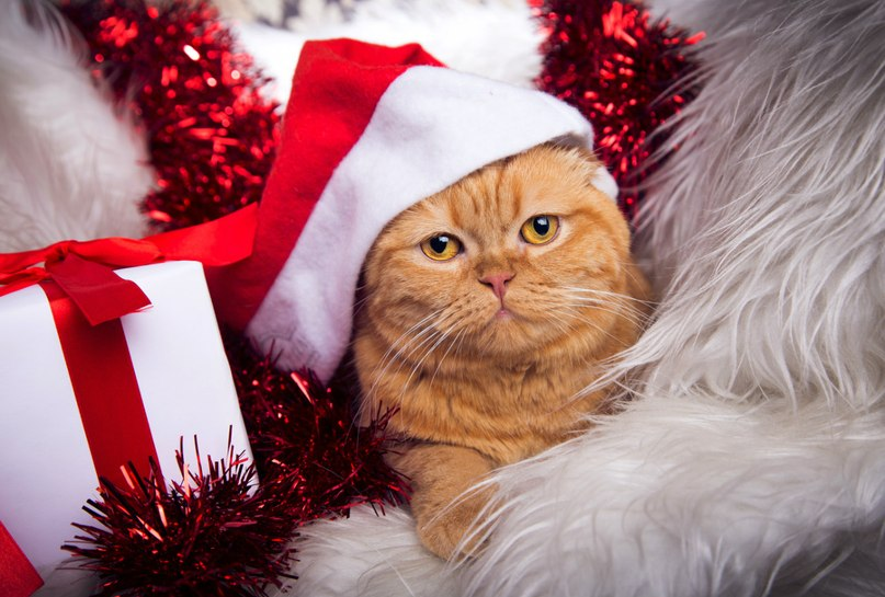 фото котиков в шапочках новогодних даже