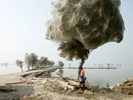 Фото Девочка с синим ведром идет рядом с деревом, покрытым паутиной в Пакистане