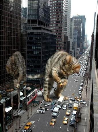 Фото Гигантский кот играет с машинами на улице города