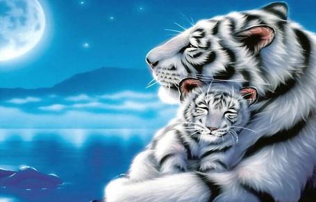 Фото Белая мама тигрица с любовью прижала лапами к себе своего маленького тигренка на фоне воды, неба, полной Луны и гор