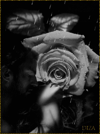 Фото Девушка положила голову на плечо мужчины, на фоне большого цветка розы, идет дождь, DIZA