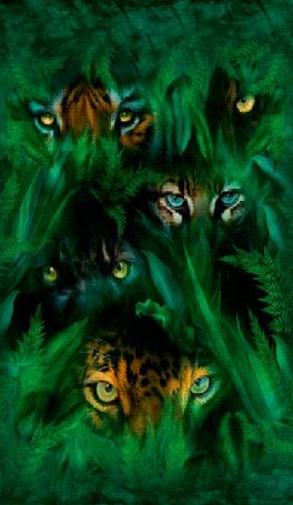 Фото Глаза хищных зверей, смотрящих с густых зарослей леса