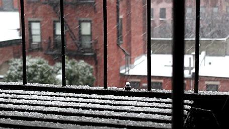 Фото Снегопад в городе