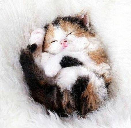 Фото Спящий маленький котенок