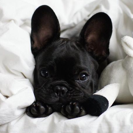 Фото Маленькая собачка на кровати