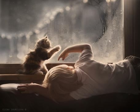 Фото Маленький мальчик и котенок у окна, by Elena Shumilova