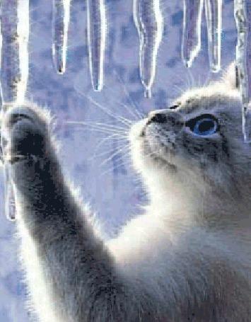 Фото Голубоглазый котенок тянется к сосулькам, с которых падают вниз капли воды