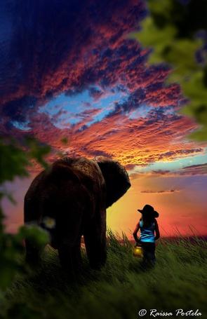 Фото Темноволосая девочка в темной, широкополой шляпе, держащая в руке горящий фонарь, идущая по зеленой траве рядом со слоном на фоне заката на вечернем небосклоне с разноцветными, перистыми облаками, автор Raissa Portela